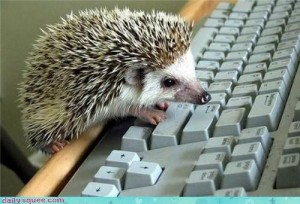 hedgehog-typing